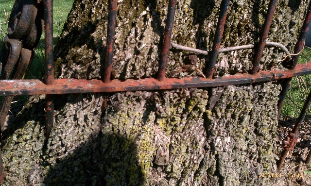 inspection reveals tree growing around fence